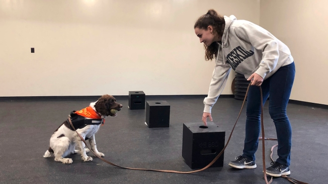 Sit. Study. Fetch a Bachelor's Degree in Dog Training