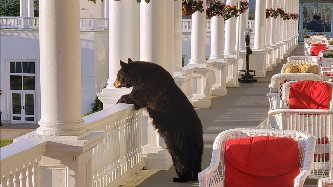 Photo Shows Black Bear Relaxing at NH Hotel