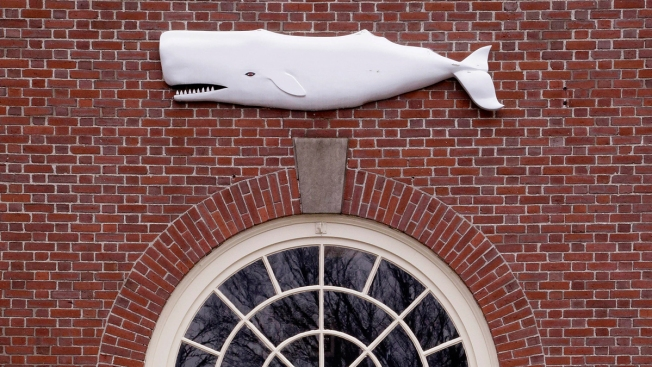 Whaling Museum Gears Up for 'Moby-Dick' Reading Marathon