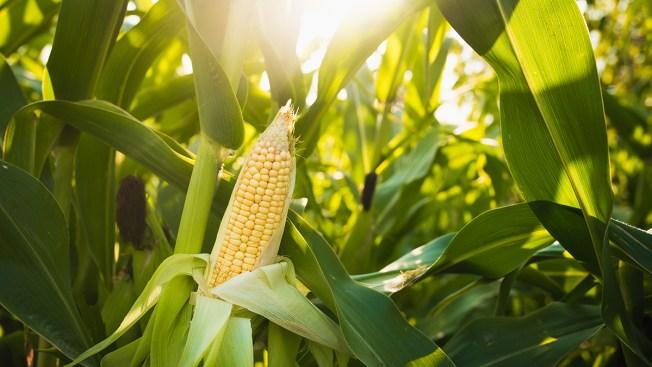 Coroner: Leader of Large Organic Food Scheme Dies by Suicide