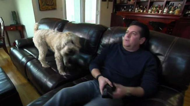 Couch Proves To Be Anything But Goof Proof At Discount