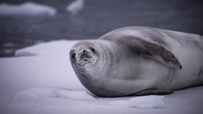 Scientists Blame Climate Change for Deadly Virus Killing Sea Mammals