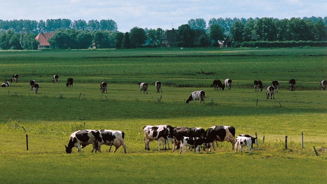 Dutch Police Investigate Family Living in Isolation on Farm