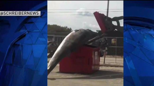 Image result for baby whale did not fit in dumpster