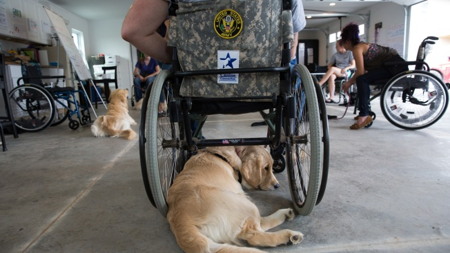 Walter Reed Stops Contract With Service Dog Program Because of 'Oversight' Issues