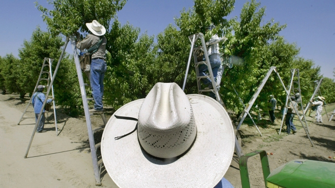 Court Orders Ban on Harmful Pesticide, Says EPA Violated Law