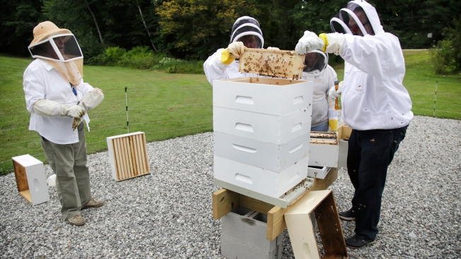 Veterans in NH With PTSD, Anxiety Turn to Beekeeping for Relief