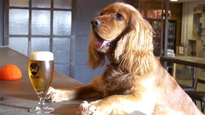 Popular Craft Brewery Makes Controversial Decision on Dogs
