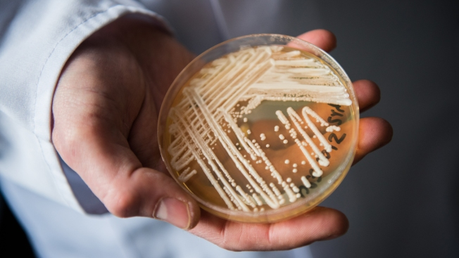 Deadly Fungal Infections May Increase With Global Warming