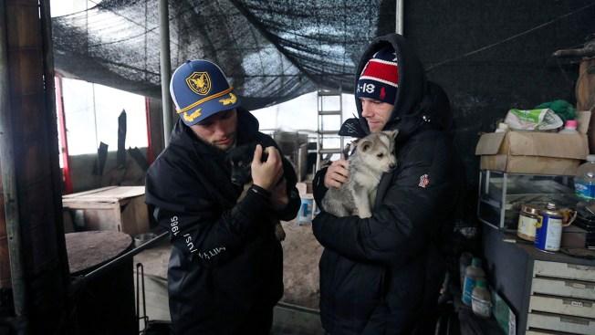 'Heartbroken' Kenworthy Visits South Korean Dog Meat Farm