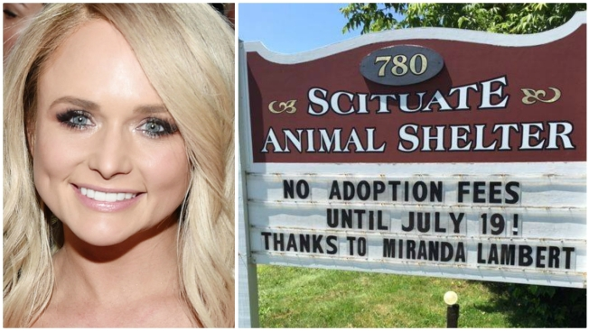 Scituate Animal Shelter Waives Adoption Fees Thanks to Miranda Lambert's Donation
