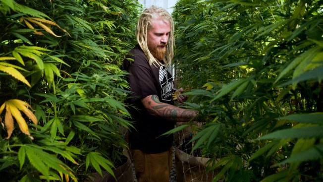 Legal Marijuana Industry Had Banner Year in 2018