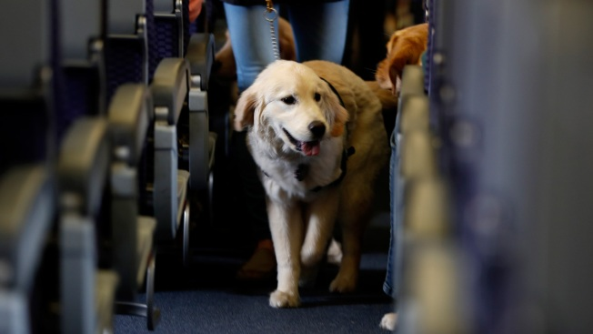 Delta cracks down on support animals on board after urination, biting incidents