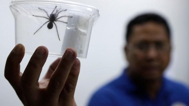 Creepy Cargo: Philippines Seizes 757 Tarantulas, Many Babies, From Poland