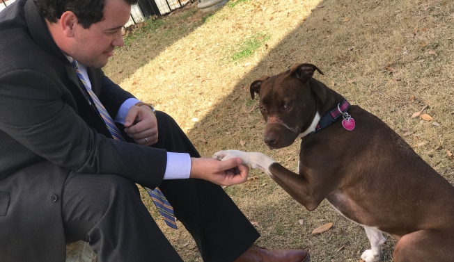 [NATL-LA] #JusticeForCaitlyn: Dog Once-Muzzled With Electrical Tape Heals