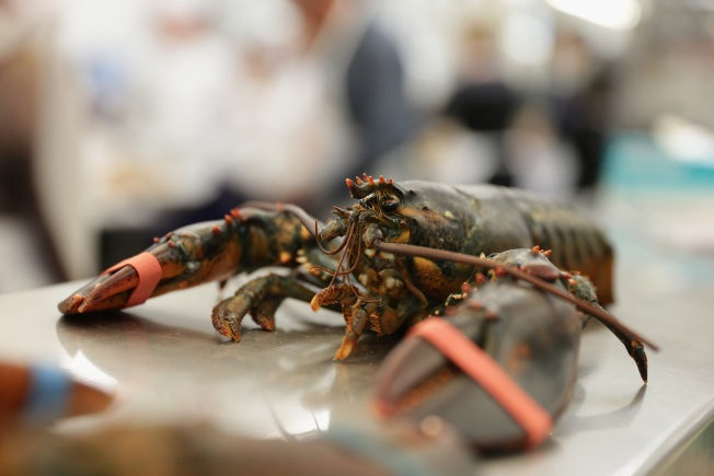 Rules Coming to Try to Save Southern New England Lobstering