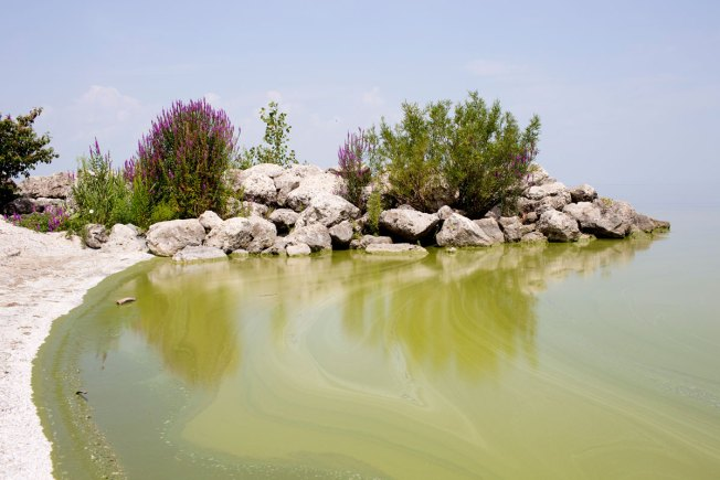 Algae on River Flowing Into Lake Erie Prompts Warning
