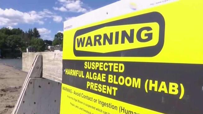 Officials Warn to Avoid Popular Lake Amid Algae Concerns