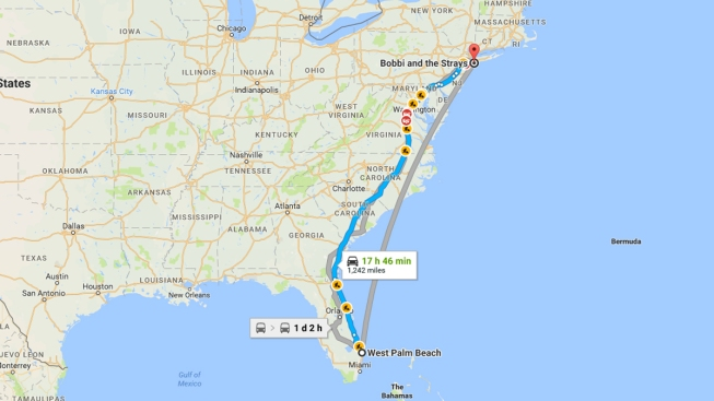 'We Kind of Gave Up on It': Dog That Disappeared in Florida Is Found 18 Months Later 1,000 Miles Away