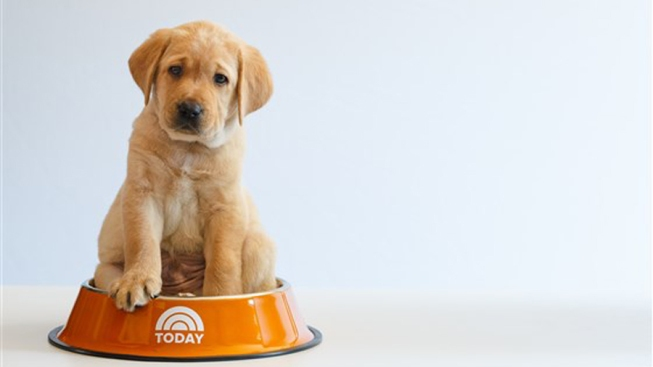 Meet — and Name — the 3rd 'Today' Show Puppy With a Purpose