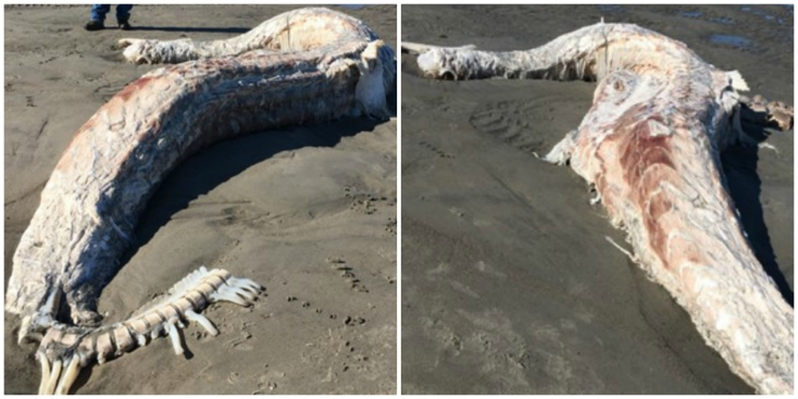 Mystery Sea Creature Washes Up on Scarborough, Maine Beach